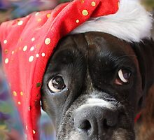 I've Been Good... Where's My Treat? -Boxer Dogs Series- by Evita