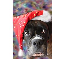 I've Been Good... Where's My Treat? -Boxer Dogs Series- Photographic Print