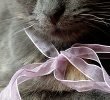 Blue Kitten with a Pink Ribbon by Tim Hilton