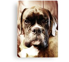 Luthien -Boxer Dogs Series- Canvas Print