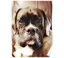 Luthien -Boxer Dogs Series- Poster
