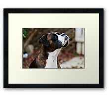 Something In the Air -Boxer Dogs Series- Framed Print
