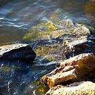 Glistening Water, On the Rocks by Ashley Frechette