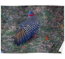 Yellow Shafted Northern Flicker Poster