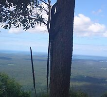 Horse Riding in the Watagan Mountains (Lake Macquarie/Hunter Valley NSW) by aaahorse