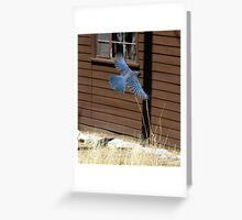 """Going Up!"" Mexican Bluejay Greeting Card"