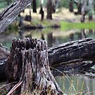 Murray River 6 by djscat