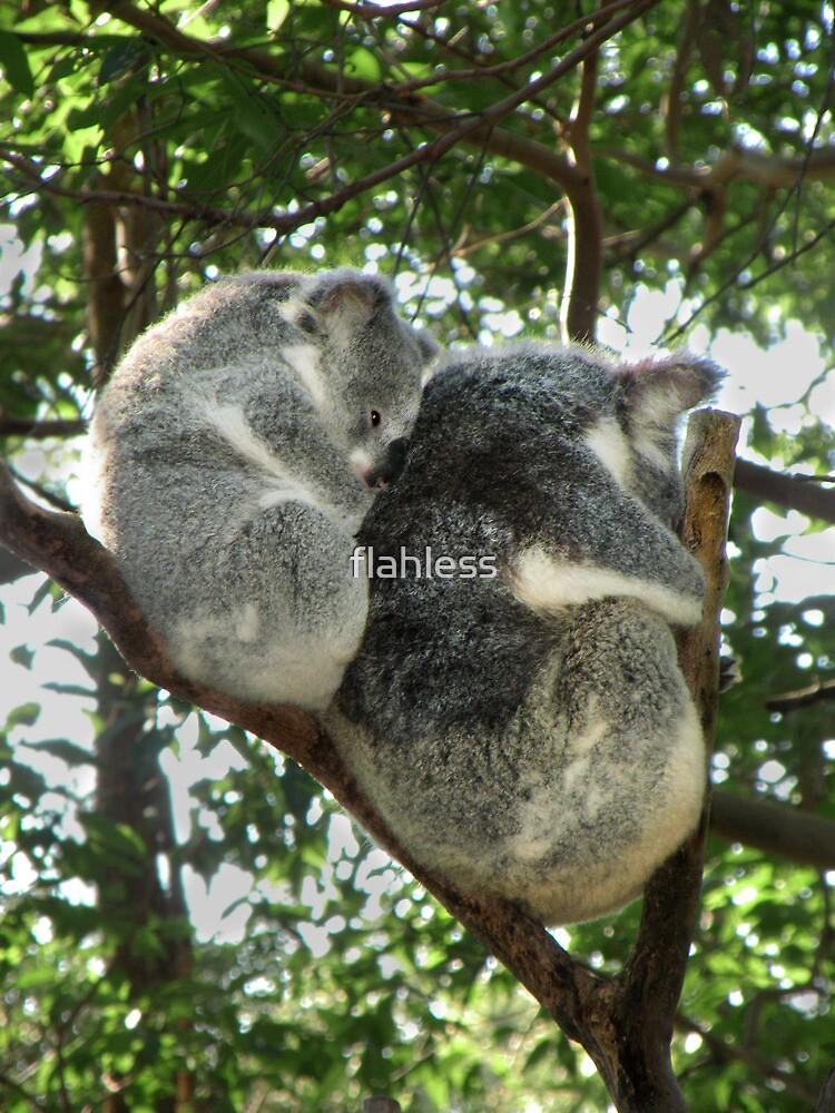 Koala see Koala do by flahless