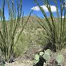 Sonoran Scenery Series ~ 4 ~ by Kimberly Chadwick