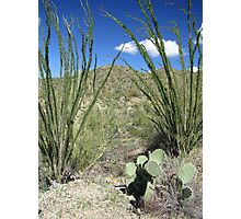 Sonoran Scenery Series ~ 4 ~ Photographic Print