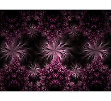 Mobius Flowers in Pink Photographic Print