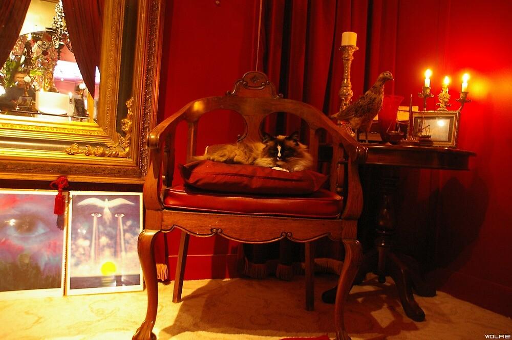 Oracle, The Cat by WolfieRankin