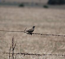 Bird on a Wire by Roderick Wallbridge