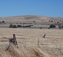 Little brown bird on a brown wire fence round a brown paddock. by Roderick Wallbridge