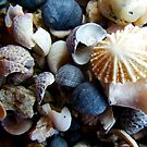 Sea Shells 1 by Janice E. Sheen