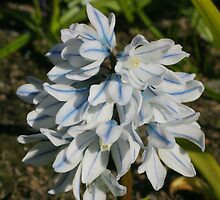 White and blue beauty by christopher363