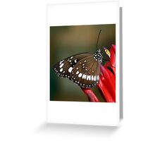 butterfly on red flower Greeting Card