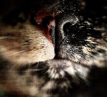 Plllerrr... by Photobot