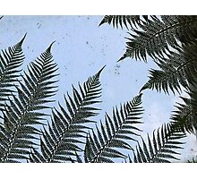 Hothouse fern silhouette Photographic Print