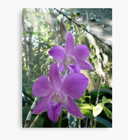 Fijian Light Purple Orchids - Garden of the Sleeping Giant Canvas Print