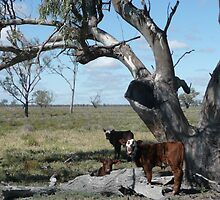 Calves Sheltering Under Tree - Oxley Station by bec87