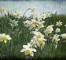 A Field of Daffodils by SharonAHenson