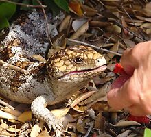 Betty feeding our resident baby lizard by georgieboy98