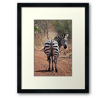 Plains Zebra, Akagera National Park, Rwanda Framed Print