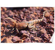 pilbara lizard Poster