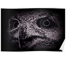 Wired Horned Owl Song Poster