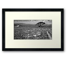 Tree on Mt Stirling, Victoria Framed Print