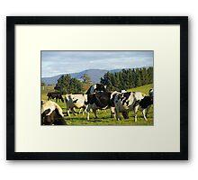Cow Porn Framed Print