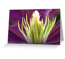 Clematis - JUSTART © Greeting Card