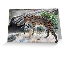 Leptailurus Serval Greeting Card