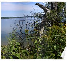 Tree at Cousins Island, Yarmouth, Maine Poster