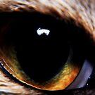 Feline eye by loz788