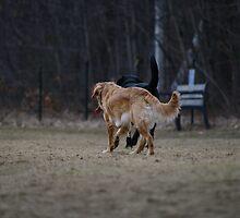 Doggie Romance by DonalMW