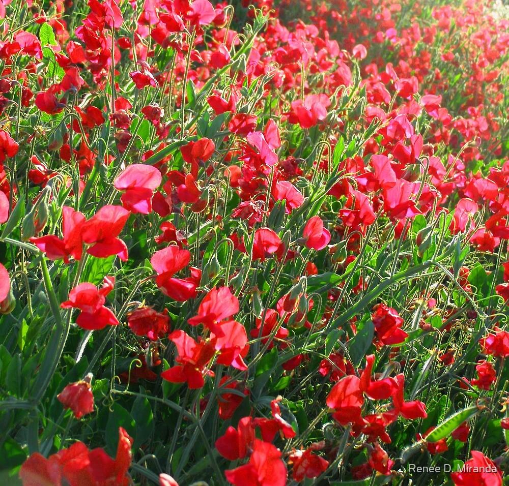 Lompoc California Flower Fields by Renee D. Miranda