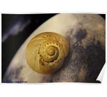 A super macro shot of a shell Poster