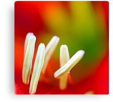 Macro of Lily Canvas Print