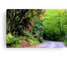 Spring on The Avenue - Mt Wilson NSW Canvas Print