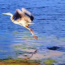 Fleeing heron by ♥⊱ B. Randi Bailey