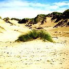 A Tuft Of Grass, Formby by Amy  Lanza