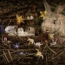Mrs. Cottontail And The Kids by Heather Haderly