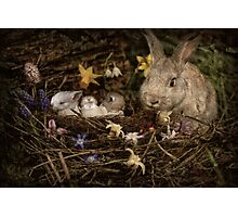 Mrs. Cottontail And The Kids Photographic Print