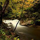 Laurel Creek Cascade by kathy s gillentine