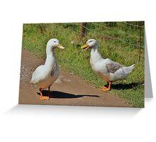 Pair of white quackers. Greeting Card
