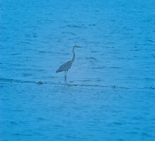 Blue Heron by Jaee Pathak