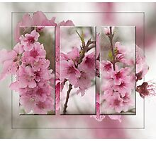 Peach Blossoms Photographic Print