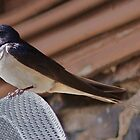 Swallow brings home food for the 'kids'. by Crannaig